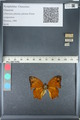 http://mczbase.mcz.harvard.edu/specimen_images/ent-lepidoptera/images/2012_05_14/IMG_119670.JPG
