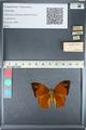 http://mczbase.mcz.harvard.edu/specimen_images/ent-lepidoptera/images/2012_05_14/IMG_119671.JPG