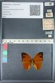 http://mczbase.mcz.harvard.edu/specimen_images/ent-lepidoptera/images/2012_05_14/IMG_119672.JPG