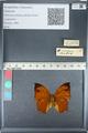 http://mczbase.mcz.harvard.edu/specimen_images/ent-lepidoptera/images/2012_05_14/IMG_119673.JPG