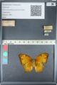 http://mczbase.mcz.harvard.edu/specimen_images/ent-lepidoptera/images/2012_05_14/IMG_119677.JPG