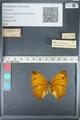 http://mczbase.mcz.harvard.edu/specimen_images/ent-lepidoptera/images/2012_05_14/IMG_119678.JPG