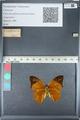 http://mczbase.mcz.harvard.edu/specimen_images/ent-lepidoptera/images/2012_05_14/IMG_119679.JPG