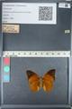 http://mczbase.mcz.harvard.edu/specimen_images/ent-lepidoptera/images/2012_05_14/IMG_119683.JPG