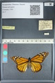 http://mczbase.mcz.harvard.edu/specimen_images/ent-lepidoptera/images/2012_05_19/IMG_120247.JPG