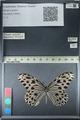 http://mczbase.mcz.harvard.edu/specimen_images/ent-lepidoptera/images/2012_06_21/IMG_122625.JPG