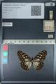 http://mczbase.mcz.harvard.edu/specimen_images/ent-lepidoptera/images/2012_06_21/IMG_122788.JPG