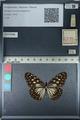 http://mczbase.mcz.harvard.edu/specimen_images/ent-lepidoptera/images/2012_06_21/IMG_122789.JPG