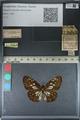 http://mczbase.mcz.harvard.edu/specimen_images/ent-lepidoptera/images/2012_06_23/IMG_122808.JPG