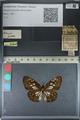 http://mczbase.mcz.harvard.edu/specimen_images/ent-lepidoptera/images/2012_06_23/IMG_122809.JPG