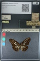 http://mczbase.mcz.harvard.edu/specimen_images/ent-lepidoptera/images/2012_06_23/IMG_122813.JPG