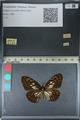 http://mczbase.mcz.harvard.edu/specimen_images/ent-lepidoptera/images/2012_06_23/IMG_122826.JPG