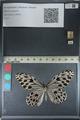 http://mczbase.mcz.harvard.edu/specimen_images/ent-lepidoptera/images/2012_06_23/IMG_122833.JPG