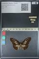 http://mczbase.mcz.harvard.edu/specimen_images/ent-lepidoptera/images/2012_06_23/IMG_122835.JPG