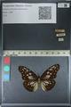 http://mczbase.mcz.harvard.edu/specimen_images/ent-lepidoptera/images/2012_06_23/IMG_122836.JPG