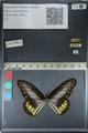 http://mczbase.mcz.harvard.edu/specimen_images/ent-lepidoptera/images/2012_06_23/IMG_122839.JPG