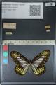 http://mczbase.mcz.harvard.edu/specimen_images/ent-lepidoptera/images/2012_06_23/IMG_122856.JPG