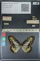 http://mczbase.mcz.harvard.edu/specimen_images/ent-lepidoptera/images/2012_06_23/IMG_122857.JPG