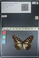 http://mczbase.mcz.harvard.edu/specimen_images/ent-lepidoptera/images/2012_06_25/IMG_122811.JPG