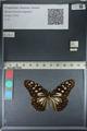 http://mczbase.mcz.harvard.edu/specimen_images/ent-lepidoptera/images/2012_06_25/IMG_122815.JPG