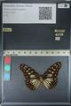 http://mczbase.mcz.harvard.edu/specimen_images/ent-lepidoptera/images/2012_06_25/IMG_122819.JPG