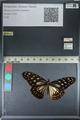 http://mczbase.mcz.harvard.edu/specimen_images/ent-lepidoptera/images/2012_06_25/IMG_122820.JPG