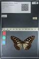 http://mczbase.mcz.harvard.edu/specimen_images/ent-lepidoptera/images/2012_06_25/IMG_122821.JPG