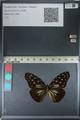 http://mczbase.mcz.harvard.edu/specimen_images/ent-lepidoptera/images/2012_06_25/IMG_122825.JPG
