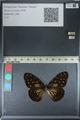 http://mczbase.mcz.harvard.edu/specimen_images/ent-lepidoptera/images/2012_06_25/IMG_122826.JPG