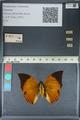 http://mczbase.mcz.harvard.edu/specimen_images/ent-lepidoptera/images/2012_06_25/IMG_122978.JPG