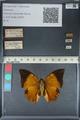 http://mczbase.mcz.harvard.edu/specimen_images/ent-lepidoptera/images/2012_06_25/IMG_122984.JPG