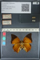 http://mczbase.mcz.harvard.edu/specimen_images/ent-lepidoptera/images/2012_06_25/IMG_122985.JPG