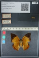 http://mczbase.mcz.harvard.edu/specimen_images/ent-lepidoptera/images/2012_06_25/IMG_122986.JPG