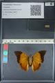 http://mczbase.mcz.harvard.edu/specimen_images/ent-lepidoptera/images/2012_06_25/IMG_122990.JPG