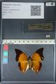 http://mczbase.mcz.harvard.edu/specimen_images/ent-lepidoptera/images/2012_06_25/IMG_122991.JPG