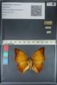 http://mczbase.mcz.harvard.edu/specimen_images/ent-lepidoptera/images/2012_06_25/IMG_122992.JPG