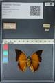 http://mczbase.mcz.harvard.edu/specimen_images/ent-lepidoptera/images/2012_06_25/IMG_122993.JPG
