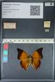 http://mczbase.mcz.harvard.edu/specimen_images/ent-lepidoptera/images/2012_06_25/IMG_122994.JPG