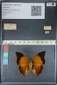 http://mczbase.mcz.harvard.edu/specimen_images/ent-lepidoptera/images/2012_06_25/IMG_122995.JPG