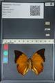 http://mczbase.mcz.harvard.edu/specimen_images/ent-lepidoptera/images/2012_06_25/IMG_123001.JPG