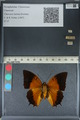 http://mczbase.mcz.harvard.edu/specimen_images/ent-lepidoptera/images/2012_06_25/IMG_123005.JPG