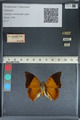 http://mczbase.mcz.harvard.edu/specimen_images/ent-lepidoptera/images/2012_06_25/IMG_123007.JPG