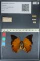 http://mczbase.mcz.harvard.edu/specimen_images/ent-lepidoptera/images/2012_06_25/IMG_123008.JPG