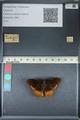 http://mczbase.mcz.harvard.edu/specimen_images/ent-lepidoptera/images/2012_06_25/IMG_123042.JPG