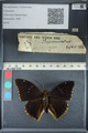 http://mczbase.mcz.harvard.edu/specimen_images/ent-lepidoptera/images/2012_06_25/IMG_123086.JPG