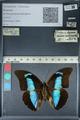 http://mczbase.mcz.harvard.edu/specimen_images/ent-lepidoptera/images/2012_06_28/IMG_123139.JPG