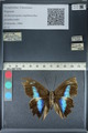 http://mczbase.mcz.harvard.edu/specimen_images/ent-lepidoptera/images/2012_06_28/IMG_123140.JPG