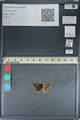 http://mczbase.mcz.harvard.edu/specimen_images/ent-lepidoptera/images/2012_08_22/IMG_126952.JPG