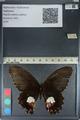 http://mczbase.mcz.harvard.edu/specimen_images/ent-lepidoptera/images/2012_08_25/IMG_127229.JPG
