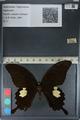 http://mczbase.mcz.harvard.edu/specimen_images/ent-lepidoptera/images/2012_08_25/IMG_127300.JPG